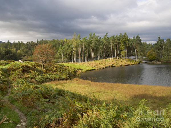 Wall Art - Photograph - Tarn Hows In Autumn by Louise Heusinkveld
