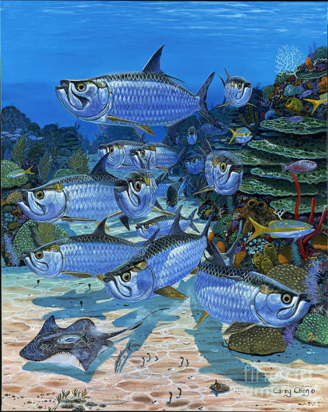 Bait Wall Art - Painting - Tarpon Alley In0019 by Carey Chen