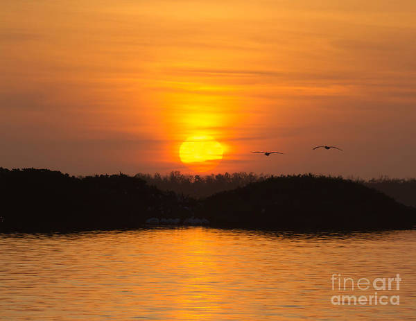 Photograph - Tarpon Bay Sunset 2 by Chris Scroggins