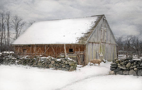 Photograph - Taste Of Winter by Robin-Lee Vieira