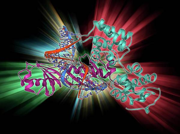 Double Helix Photograph - Tata Box-binding Protein Complex by Laguna Design