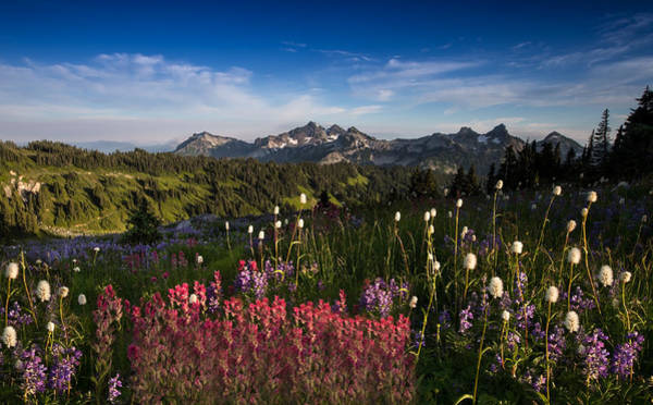 Wildflowers Photograph - Tatoosh Mountain Range by Larry Marshall