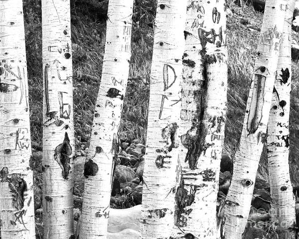 Uinta Photograph - Tattoo Trees by Rebecca Margraf