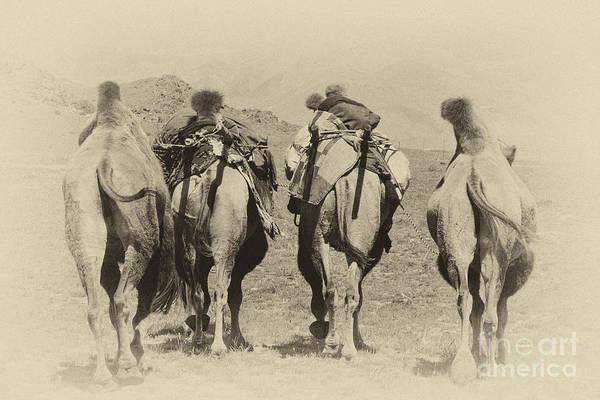 Photograph - Tavan Bogd- Mongolia by Karla Weber