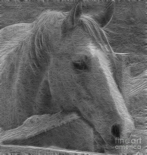 Photograph - Taz Quarter Horse Art Bw by Lesa Fine