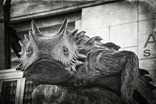 Wall Art - Photograph - Tcu Horned Frog 2014 by Joan Carroll