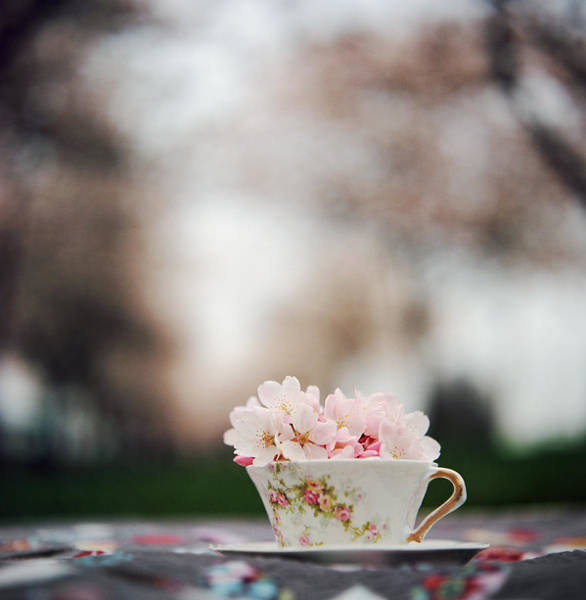 Spillway Photograph - Tea Cup Filled With Cherry Blossoms by Danielle D. Hughson
