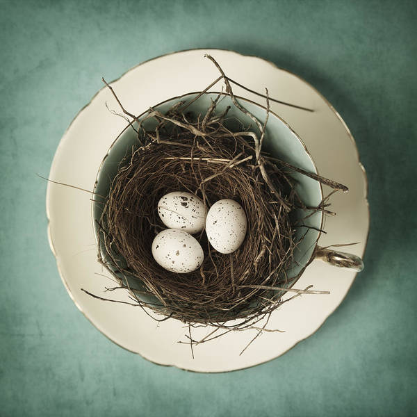 Birds Eggs Photograph - Tea For Three by Amy Weiss
