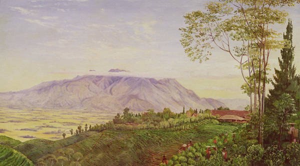 Terrain Painting - Tea Gathering In Java by Marianne North