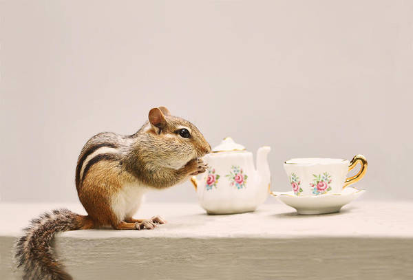 Photograph - Tea Party With Chipmunk by Peggy Collins