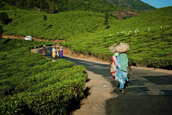 Real People Photograph - Tea Pickers From Munnar by Ania Blazejewska