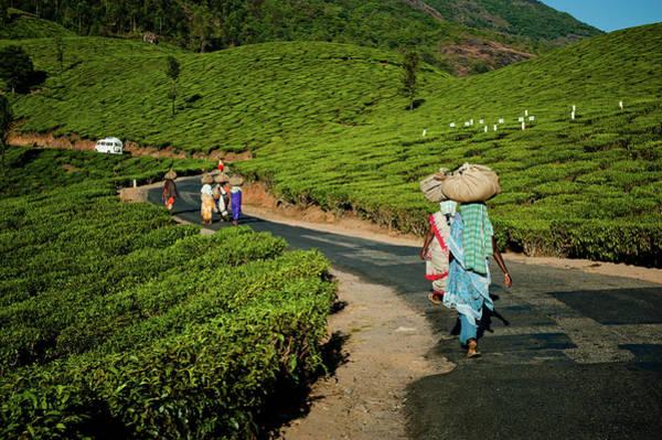 Kerala Photograph - Tea Pickers From Munnar by Ania Blazejewska