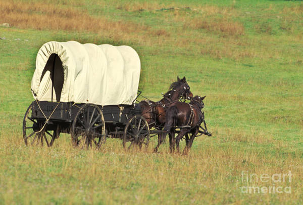 Re-enactment Wall Art - Photograph - Team Of Horses Pulling A Covered Wagon by Ron Sanford
