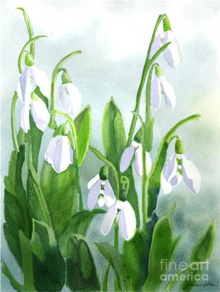 Snowdrop Painting - Teardrops In The Snow by Joan A Hamilton