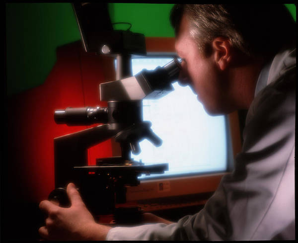 Light Microscope Wall Art - Photograph - Technician Examines A Slide Under A Microscope by Deep Light/science Photo Library