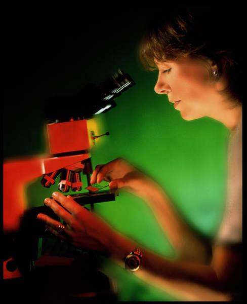 Light Microscope Wall Art - Photograph - Technician Using A Binocular Light Microscope by Deep Light/science Photo Library