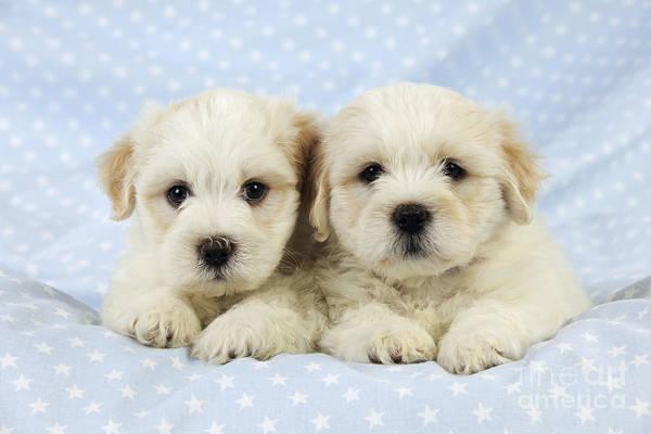 Wall Art - Photograph - Teddy Bear Puppy Dogs by John Daniels