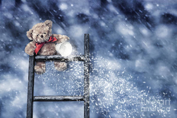 Ladders Photograph - Teddy Throwing Snow by Amanda Elwell