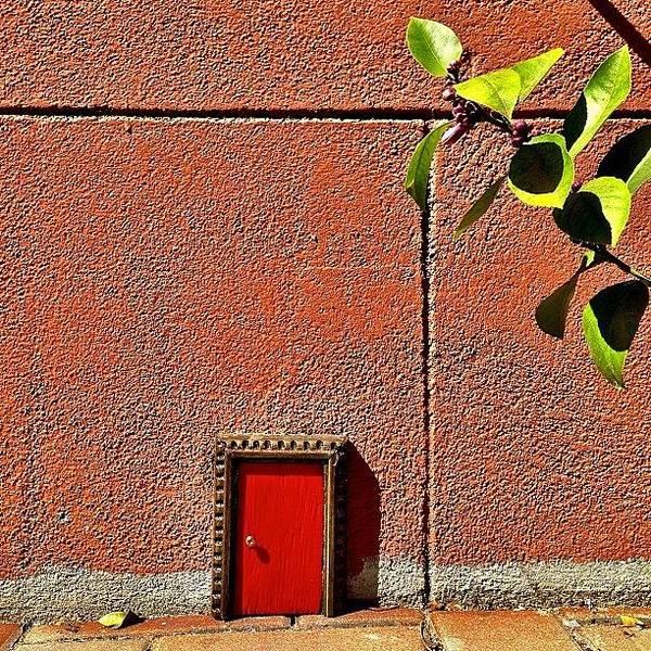 Wall Art - Photograph - Teeny Tiny Door by Julie Gebhardt