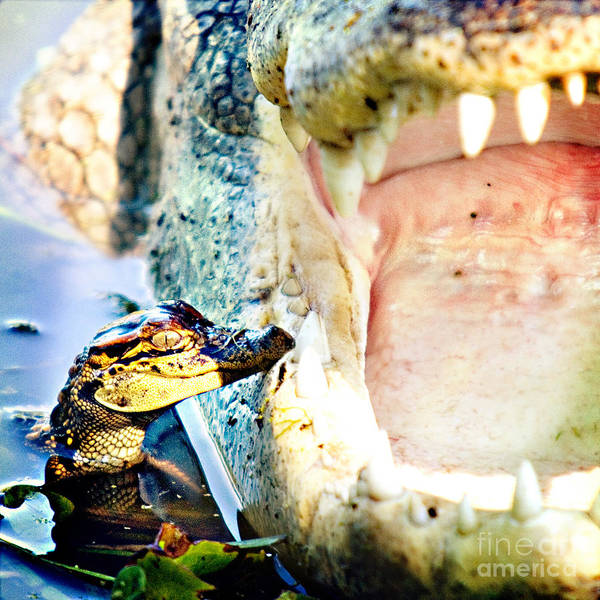 Brazos Bend State Park Wall Art - Photograph - Teeth And Trust by Katya Horner