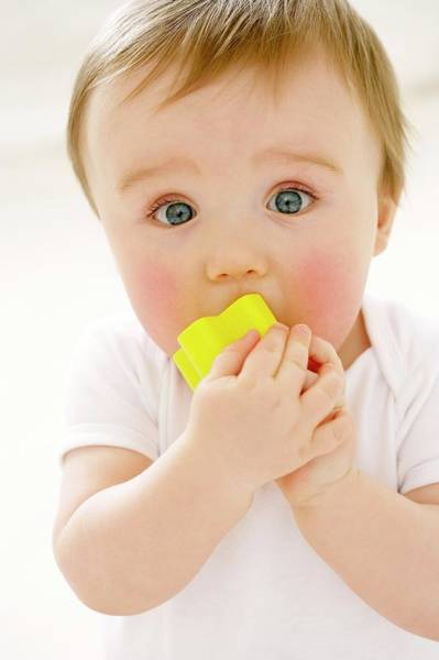 Chewing Wall Art - Photograph - Teething Baby by Ruth Jenkinson/science Photo Library