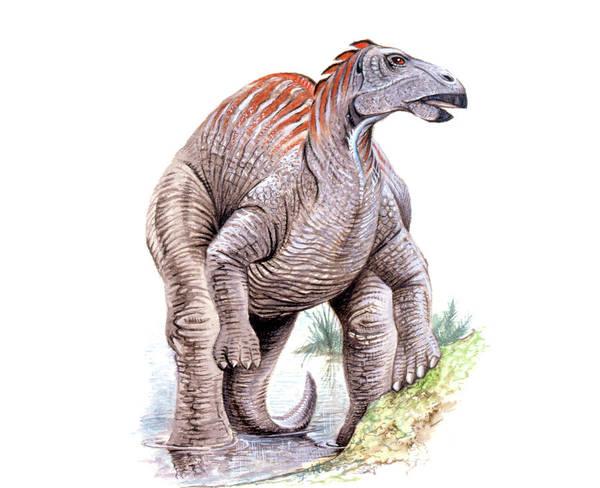 Paleozoology Wall Art - Photograph - Telmatosaurus Dinosaur by Deagostini/uig