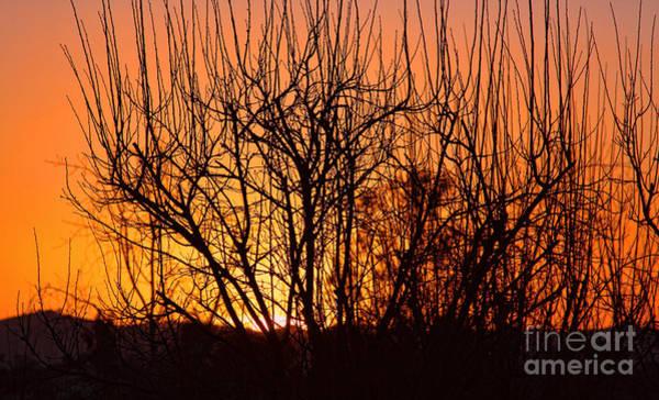 Photograph - Temecula At Sunset By Diana Sainz by Diana Raquel Sainz