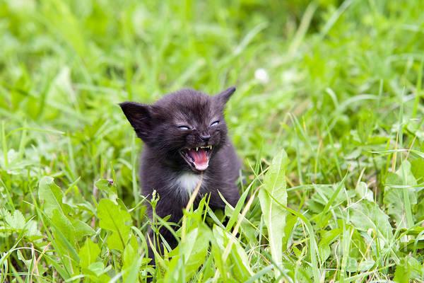 Wall Art - Photograph - Temper - Small Kitten In The Grass by Michal Boubin