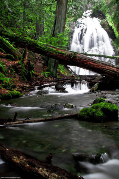 Photograph - Temperate Old Growth by Joseph Noonan