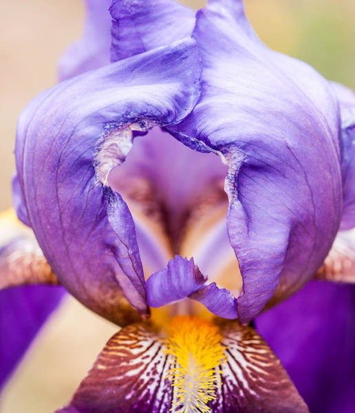 Photograph - Temple Of The Iris by Lara Ellis