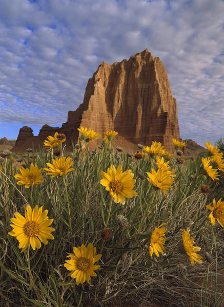 Photograph - Temple Of The Sun With Sunflowers by Tim Fitzharris