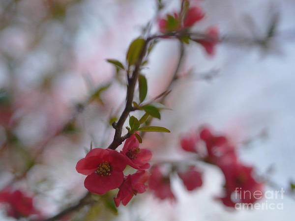 Quince Photograph - Temptation In The Air by Irina Wardas