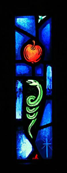 Serpent Photograph - Temptation by Stephen Stookey