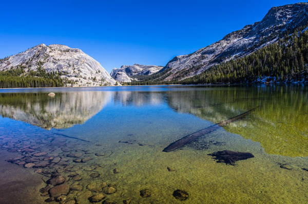 Dome Peak Photograph - Tenaya Lake Yosemite National Park by Scott McGuire
