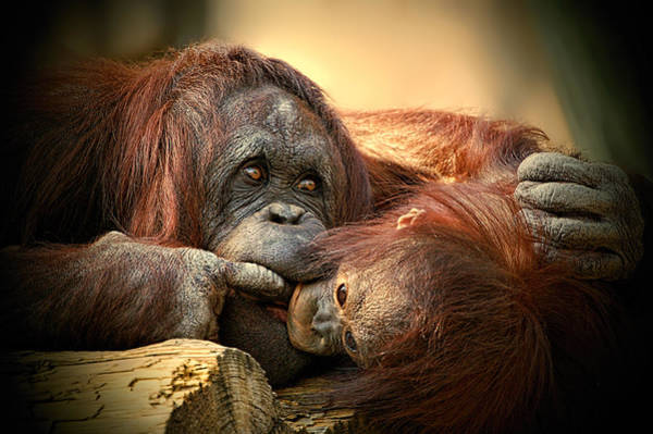 Photograph - Tender Moment by Donna Proctor