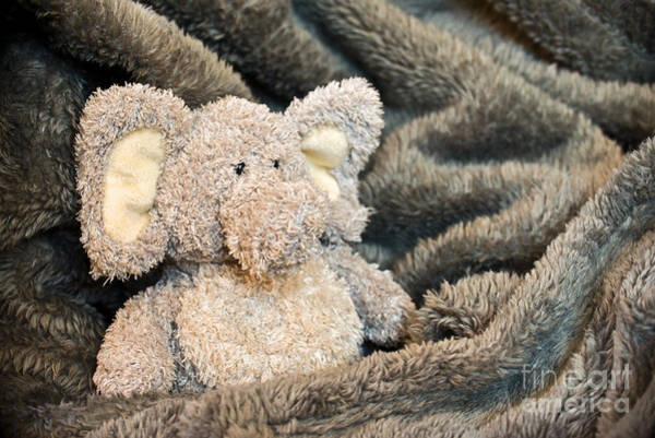 Teddy Photograph - Tenderness by Delphimages Photo Creations