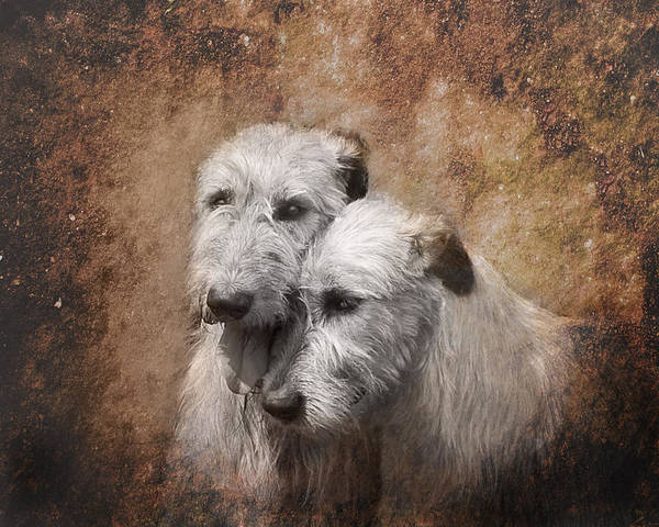 Sighthound Wall Art - Digital Art - Tenderness by Mary OMalley