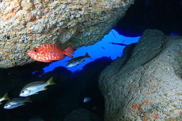 Undersea Photograph - Tenerife Underwater Cove by Manex Catalapiedra