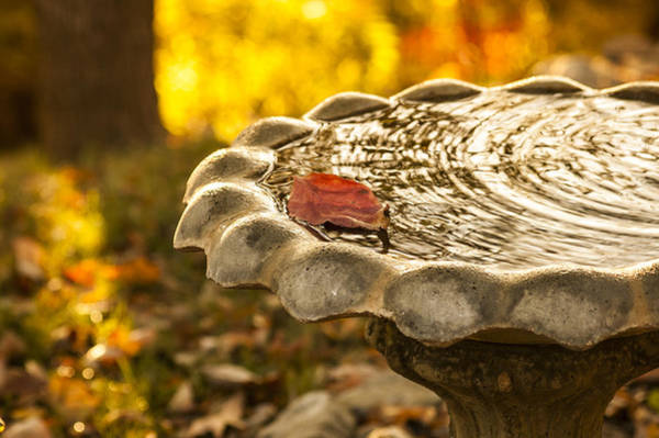 Photograph - Tennessee Birdbath by Carolyn Marshall