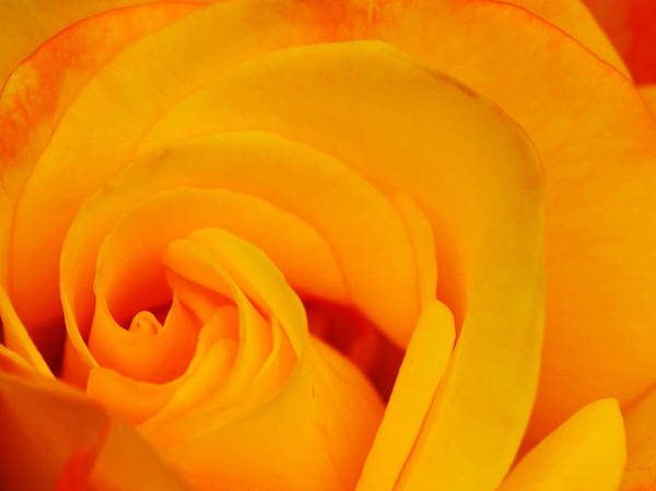 Tequila Sunrise Photograph - Tequila Sunrise by Susan Tinsley