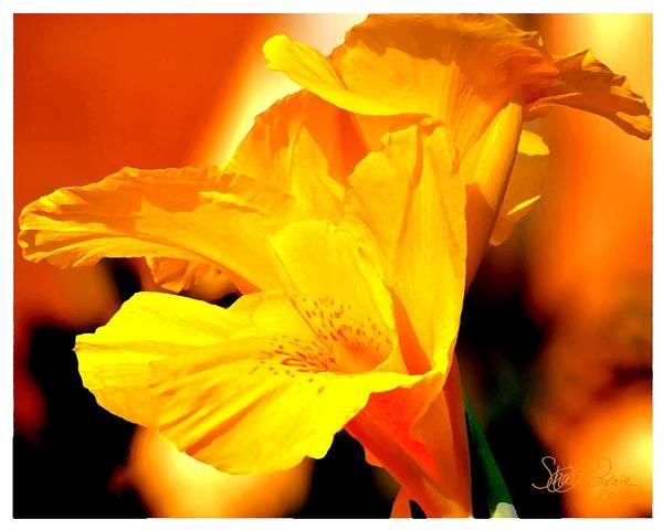 Tequila Sunrise Photograph - Tequila Sunshine by Sharon  Lavoie