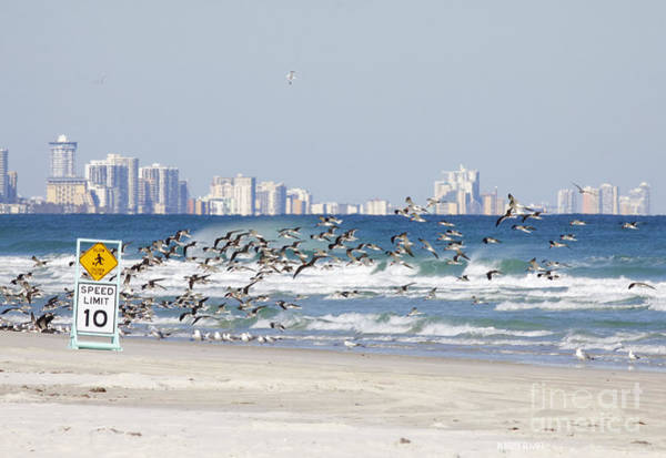 Terns On The Move Art Print