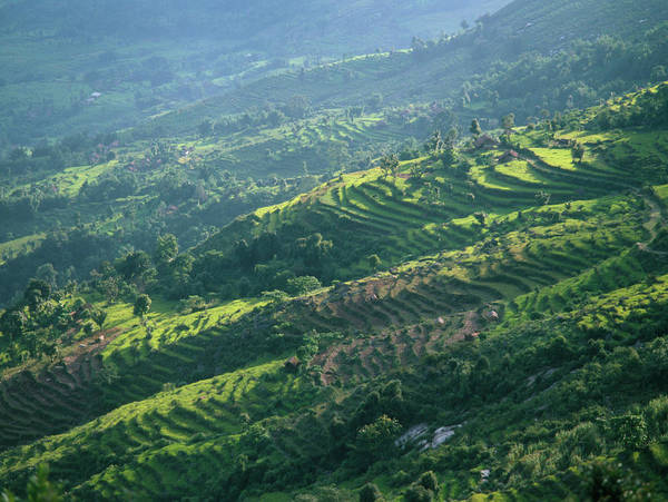 Nepal Wall Art - Photograph - Terraced Fields by Simon Fraser/science Photo Library