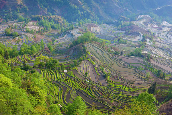 Wall Art - Photograph - Terraced Rice Fields, Yuanyang, China by Art Wolfe