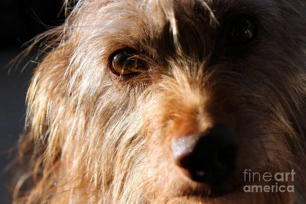 Photograph - Terrier Closeup by Janice Byer