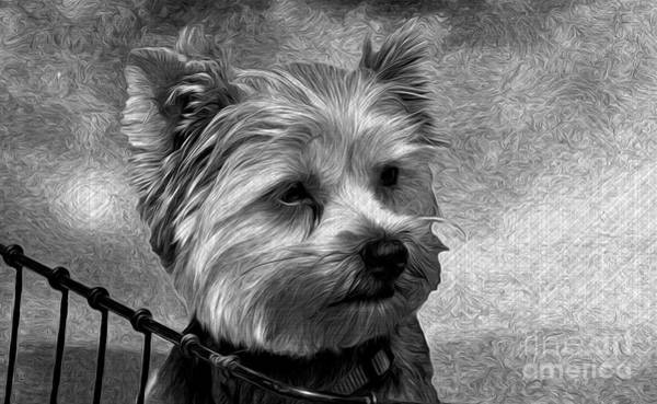 Liane Photograph - Terrier - Dog - Playing With Light by Liane Wright