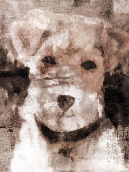 Mixed Media - Terrier I by Lutz Baar