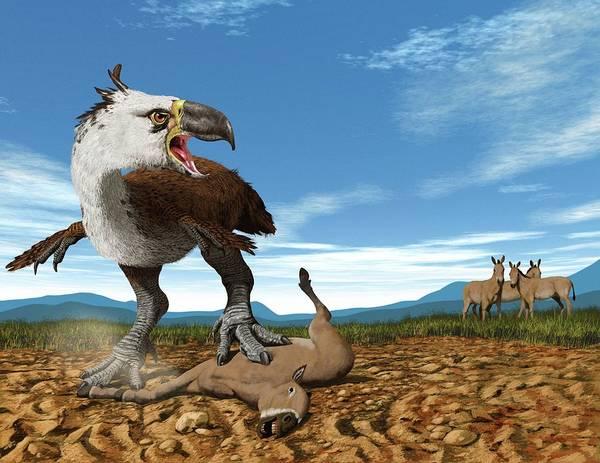 Big 5 Photograph - Terror Bird by Jaime Chirinos/science Photo Library