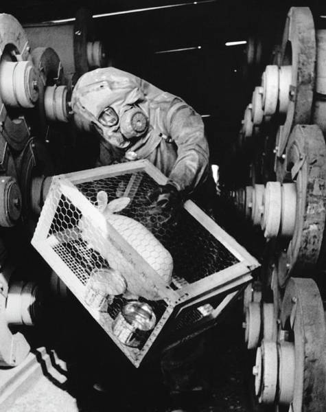 Technician Photograph - Testing For Nerve Gas by Library Of Congress