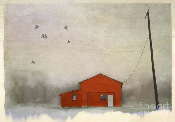 Wall Art - Photograph - Tethered by Elena Nosyreva
